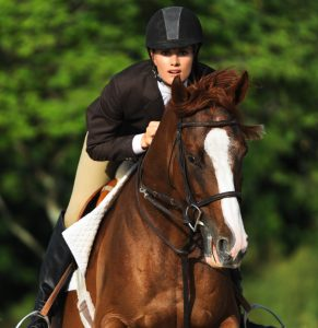 Photograph of a show jumper