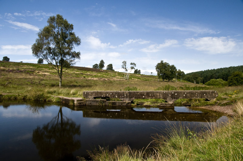 4. Cannock Chase, Staffordshire